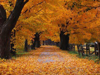 jesen1