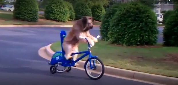 pas-biciklo1