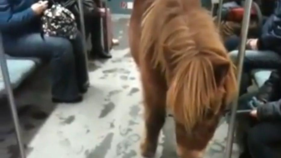 konj-podzemna1