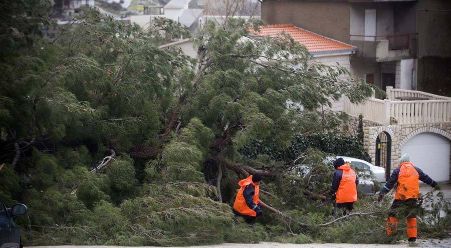 D.Rat, 05.03.2015 - Jaka orkanska bura srusila drvo na cestu u Dugom Ratu