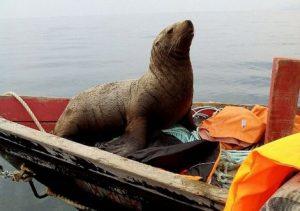 foka-ruski-ribari2