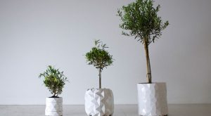 saksija-biljke-rast2
