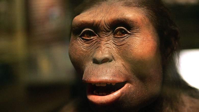 covjekoliki-majmun-Lucy