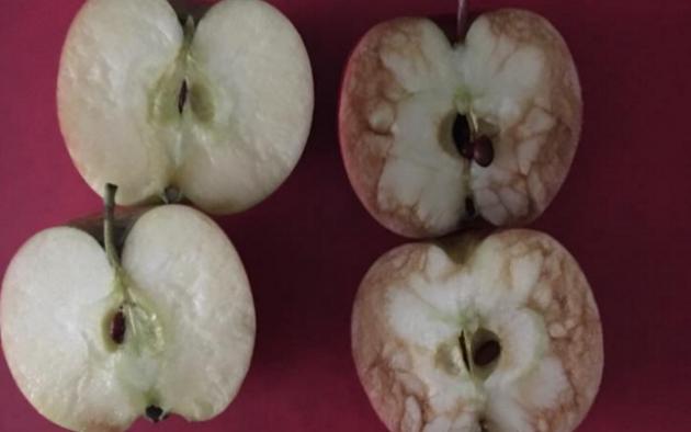 lekcija-jabuke2