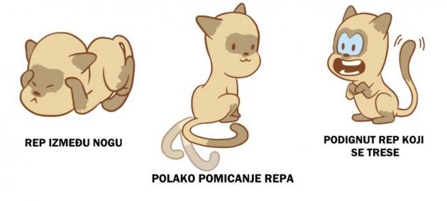macka-rep4