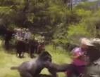 gorila-napad
