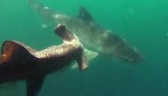 morski-pas-napad