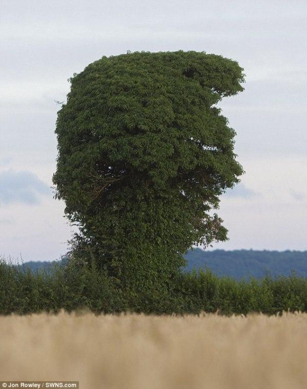 drvo-donald-trump (2) - Copy