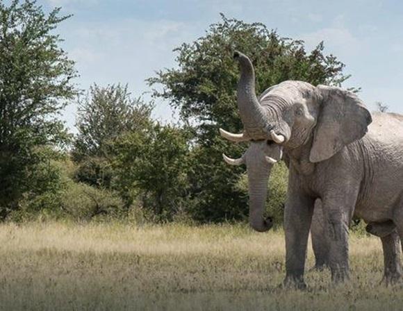 dva-slona-dvije-surle