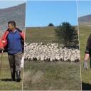 Prijavljeni, plata redovna: Nesiha i Amir mjesečno zarade 4.000 KM čuvajući ovce na Kupresu