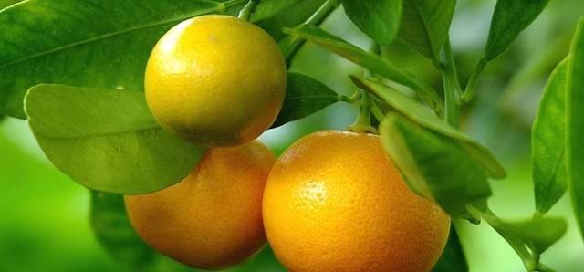 mandarineee