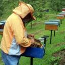 Loša godina za pčelare u TK, nadaju se izmjeni poticajne politike (VIDEO)