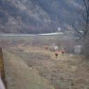 Pretražena dionica duga 130 kilometara: Ni traga mladiću koji je upao u Miljacku