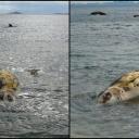 Na plaži kod Orebića pronađena velika morska lešina (FOTO)