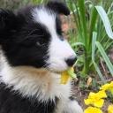Proljeće donosi opasnosti za vaše ljubimce: Ove biljke mogu biti kobne za vaše pse