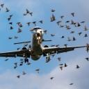 Iznad Aerodroma Sarajevo avion naletio na jato golubova, svjedoci mislili da avion pada