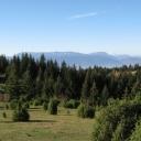 Ekolozi traže da se zaštiti šumsko bogatstvo BiH