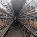 Bingo savremenim pogonom rješava problem isparavanja sa farme koka u Ciljugama