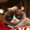 Uginula najpoznatija mačka na svijetu