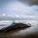 More na Siciliju izbacilo kita punog plastike