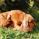 Alergije su postale sve češći problem čak i kod pasa: Saznajte više o tome…