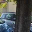 Turist začudio Dalmatince: Vješt u parkiranju, ali ne i u razmišljanju?