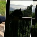 Medo se popeo na balkon i uplašio vlasnika kuće (VIDEO)