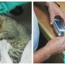 Zatvorski čuvari uhvatili mačku koja je pokušala unijeti mobitel u zatvor