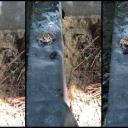 Žaba zgrabila plijen pa na urnebesan način pokazala šta misli o 'ručku'