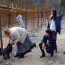 U Bugojnu otvoreno prihvatilište za zbrinjavanje pasa lutalica