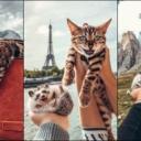 """Bengalska mačka i afrički jež su najslađi """"petfluenseri"""""""