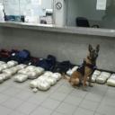"Srbija: Pas ""namirisao"" 56 kilograma droge, bila skrivena u autobusu"