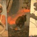 Njen gest rasplakao mnoge: Skinula majicu i spasila koalu iz požara
